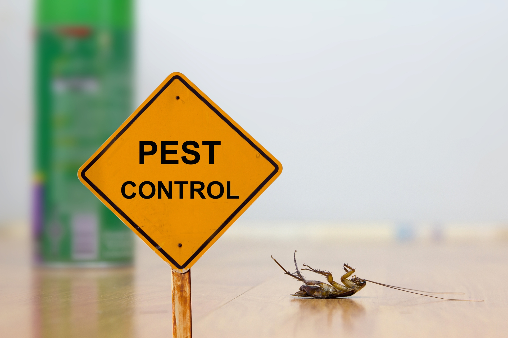 24 Hour Pest Control, Pest Control in Balham, SW12. Call Now 020 8166 9746